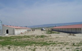 PIG FEEDLOT IN TAUSTE, PROV. OF ZARAGOZA